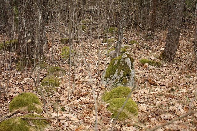 Такие каменные линии в лесу тянутся на многие сотни метров